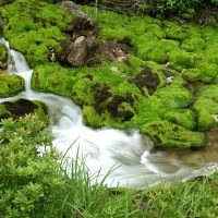 天然ビロード緑の絨毯!奥草津の苔モフワールドに癒される「チャツボミゴケ穴地獄」
