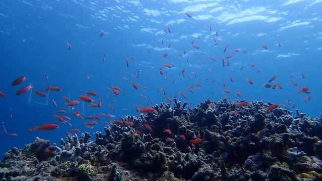 約2週間ぶりの石垣島!<br />今回は海の中を探索しようと考えて新しいカメラを購入!<br />やっぱり石垣に癒された旅になりました。