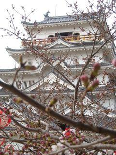 お花見 福山城公園