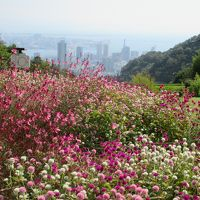 香りに包まれて神戸ひとり旅 3日目 〜南京町で目いっぱい食べて、ハーブ園で癒されて〜