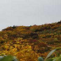 黄葉を求めて須川高原へ行きましたが・・・・。