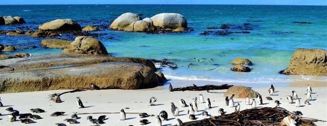 そこは 、ペンギン・パラダイス! 南アフ...
