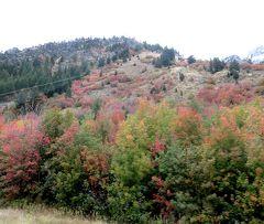 団塊夫婦の2017年アメリカ国立公園ドライブ旅行ー(7)グランドティトン(その1):思わぬところで紅葉に巡り合う