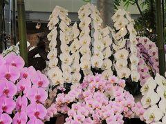 美馬-3 あんみつ館 秋の洋蘭展;ディスプレイ見事に ☆河野メリクロンの直営施設で