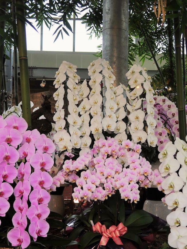 """あんみつ館・・世界一の""""らん""""を生んだ河野メリクロン直営施設<br /><br />本社入口にあるショールームと直売所を兼ねた施設です。シンビジウムの美の歴史に新しい1ページを開いた名花&quot;あんみつ姫&quot;にちなんで「あんみつ館」と名付けられました。<br />シンビジウム、胡蝶蘭などの洋らん類はもちろん母なるらん花から生まれた逸品たちを季節ごとに年中ご用意いたしております。<br />お蘭見広場(おはなみひろば)<br />平成11年オープン。季節毎の洋らんをディスプレイ展示しています。洋蘭展でしか見る事のできないようなディスプレイをお蘭見広場でお楽しみください。<br />平成3年にオープンしたあんみつ館本館。高級蘭花、貴重な蘭等を集めた展示販売施設です。あんみつ館本館でなくてはなかなか見る事の出来ない蘭花をお楽しみください。<br />平成8年にオープンしたあんみつ館新館。胡蝶蘭・シンビジウムを中心とした様々な洋らんと、らんから生まれた逸品を取り揃えています。<br />平成27年にオープンしたあんみつ館直売所。シンビジウムを生産直売でお手頃な価格で販売しています。こちらでは切花も販売しています。<br />(https://www.anmitsukan.jp/facility_guide.php より引用)<br /><br />河野メリクロン については・・<br />https://www.kawano-mericlone.com/<br /><br />メリクロンとは、メリステム(meristem、主として茎頂 (shoot apex) のメリステム)とクローン (clone) をつなぎ合わせて作られた言葉。すなわち、茎頂培養のことを言う(メリステムのことを和訳して分裂組織という)。<br />植物体の頂端分裂組織近辺にある細胞は一般的にウイルスフリーであるため、論理上、この細胞を培養することでウイルスフリーの植物体を作ることができる。また、ランなど繁殖が難しい植物では、繁殖方法の1つとして用いられている方法でもある。<br /> (フリー百科事典『ウィキペディア(Wikipedia)』より引用)<br /><br />"""