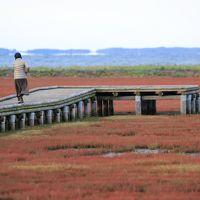 秋の北海道 10日間 気ままな女子旅 日没地が宿泊地 (2) 〜深紅のさんご草〜