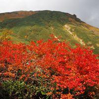 まさに紅葉絶頂の谷川岳 西黒尾根から天神尾根♪