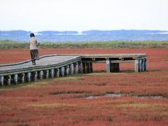秋の北海道 10日間 気ままな女子旅 日没地が宿泊地 (2) ~深紅のさんご草~