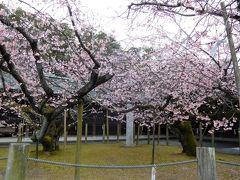 2017年3月福岡と大分 その1 宮地獄神社で一足早く咲く寒緋桜を見ました。
