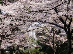 2016年の桜・川崎と鎌倉