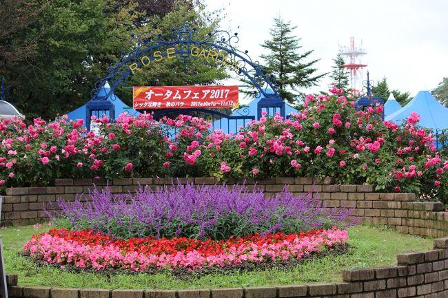 秋雨前線のため雨が続いています。<br />17日は午後からやんだので、出かけてみました。<br />雨が5日も続いたせいか花が元気がなかったような・・。<br />