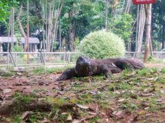 ラグナン動物園で時間つぶし