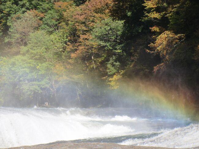 テレビでチラッと流れた吹割の滝の今の映像……えっ!!!<br /><br />!(◎_◎)!<br /><br /> 水量がスゴイ!♪♪     コレは見に行くしかありません<br />さっそくお出かけです(^ー^)ノ<br /><br />素晴らしい…………………<br />東洋のナイアガラ復活です<br />♪───O(≧∇≦)O────♪<br /><br />立ち昇る水飛沫に虹がかかり<br />紅葉を背景に 美しいですね~<br /><br />「吹割の滝」では無く 「吹割瀑」と呼ばせていただきます<br /><br />最高の姿を見せて頂きました( ^ω^ )<br /><br />今年は6月、8月と見に来た時ちょろちょろで<br />皆さん「滝…ふーん…」と言うリアクションをなさっていたのですが<br />コレなら「おぉっ! (^ ^)」ですね<br /><br />今日見に行って本当に良かった!♪♪<br />