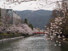 春の京都ひとり旅【10】三日目・岡崎神社、平安神宮と岡崎疎水の桜、六角堂、大極殿の琥珀流しも桜