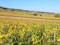 フランス:黄金の秋、ワイン街道(1):葡萄畑と黄葉見物