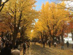北海道大学のイチョウ並木と小樽メルヘン交差点のハロウィン、最後に小樽芸術村