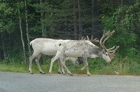22回目のフィンランド旅行12-6日目雨の日,Ounasvaara経由でサンタ村へショッピング