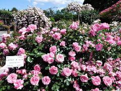 2017年6月 広島湯めぐり その2 湧永満之記念庭園できれいなバラを見ました。