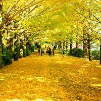 色付くイチョウ並木 昭和記念公園