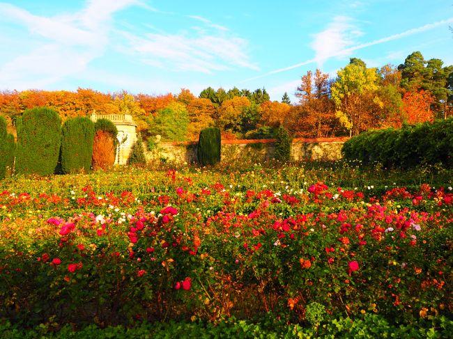 この日はフランクフルトから日本への帰国日。<br />朝はタクシーが来るまでの間、古城ホテルで朝食を楽しみ、秋の気配色濃い庭を散策した。秋薔薇が見ごろで、旅の最後に素敵なひと時を過ごすことができた。<br />ドイツ・スペインで過ごした8泊10日の間、最後までパーフェクトな天気に恵まれ、本当にラッキーだった。<br /><br />【フランクフルトの天気】--------------------------------------------------<br />快晴 最高20度 最低5度 朝の時間は冷える。薄手のコートは必要。<br /><br />【旅程】--------------------------------------------------<br />10/10(火)~10/19(木) 8泊10日 <br /> 1日目  羽田→ミュンヘン(ミュンヘン泊)<br /> 2日目  ミュンヘン(ミュンヘン泊)<br /> 3日目  ノイシュヴァンシュタイン城へ現地ツアー(ミュンヘン泊)<br /> 4日目  オーストリアへ日帰り旅(ミュンヘン泊)<br /> 5日目  ミュンヘン→ビルバオ(ビルバオ泊)<br /> 6日目  ビルバオ→バルセロナ(バルセロナ泊)<br /> 7日目  バルセロナ(バルセロナ泊)<br /> 8日目  バルセロナ→フランクフルト(フランクフルト泊)<br />★9日目  フランクフルト→セントレア(機中泊)<br />★10日目 帰国
