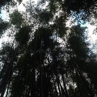 年越し旅行(京都〜出雲〜大阪)2017年〜2018年 1日目