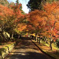 紅葉まっさかり 身延山登山と下部温泉に浸かる!