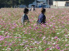 久しぶりの福岡への旅⑧キリンビール福岡工場〔朝倉市〕のコスモス園訪問