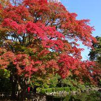 山形, 上杉神社〜山寺へ  紅葉と米沢牛のお店