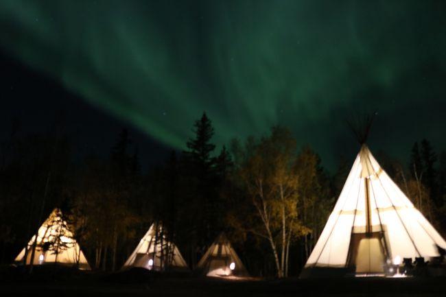 極寒でなくてもオーロラを見ることができる。これがこのツアーを申し込むきっかけとなった第1の理由です。<br />「黄金のカナディアンロッキーと神秘のオーロラ7日間」<br /><br /> 9月26日(火)成田16時25分発 エアカナダで、9時間5分のフライトにて、カナダはオリンピックで有名なカルガリーへ<br /> カルガリーからイエローナイフへ2時間28分<br /> イエローナイフの中心部にある、クオリティインアンドスィーツに3連泊<br /><br /> 荷物を置いて、22時バスでオーロラ鑑賞専用施設オーロラビレッジに移動。 <br /> まずはオーロラビレッジの施設紹介やその日の私達ツアー専用テント・ティービーに案内され、いよいよオーロラが出現するのを待ちます。<br />オーロラの出現条件は、①暗いこと、②晴れ渡っていて、雲がないこと、③オーロラの出現があることだそうです。<br /> 特に夜中の1時ころが一番出現確率が高いのだそうです。<br /><br /> 1日目、「遠くに薄明るい感じでぼんやり白い帯状のものがあるのがオーロラなんだろうね。」と言っていた矢先、光のカーテンがひらめくように大きく現れたのです。<br /> 白だけではありません。虹色、赤い光もピンクのような光も肉眼で見えます。狼の遠吠えのような唸り声が聞こえたかと思うと、オーロラが光を放ち大きく動くのです。ベールが天上から降り注ぐように、なったかと思うと、まさに火の鳥が舞わんかと思わんばかりの動きだったり、長い体をうねらせて龍が空を駆け巡るような光の帯だったりと色々なオーロラを見せてくれました。見ている私たちも動くたびに大きな歓声が聞こえてきます。ホントに素晴らしい光景でした。こんなに夜空いっぱいにパフォーマンスをしてくれるものとは知りませんでした。<br /> 2日目はホテルを出発するときからうっすらと見えました。低めの大きな光の帯がゆったりと流れているのです。何年かここに住むガイドさんでもこのような光景は珍しいとのことでした。オーロラビレッジに着いたころが一番、オーロラは動いていたようです。湖に移動してからは静かなオーロラを鑑賞しました。<br /> 3日目はオーロラビレッジでの夕食ということで、早くからオーロラ鑑賞ができました。ただ、1日目2日目を見ている私たちにとっては、動きが弱く、新しく来られた方が歓声をかげていても、贅沢な話ですが、それほどでは無いと割合客観的に見ていたようです。<br /> 1日目2日目はレベル5、3日目もレベル4だったそうで、本当にラッキーでした。<br /> 極寒でないと、オーロラが見れない。そう思い込んでいたのですが、マイナスの温度にならなくても、いつものダウンを着ているだけの防寒具でも(一応寒いと思っていたので、日本から持ってきたダウンを二枚重ねしました。)素晴らしいオーロラを見ることができました。<br /><br /> イエローナイフはオーロラだけではありません。<br /> お昼には自然豊かな中へと、バイソン探しへのツアーとキャメロン滝へのミニハイキングへ出かけました。<br /> 本当に私たちは運がよくて、バイソンにも会うことができました。大きなバイソンや、子ども連れのバイソンが道路を横断して行く様子も観察することができました。<br /> キャメロン滝周辺は黄葉真っ盛りでした。その中でも、下草の赤、中間には白樺の幹の白、上を見上げると黄色というように美しい様子を見せてくれました。ツアーは韓国人、中国人、日本人が入り乱れたバスの利用だったので、ガイドがそのグループごとに付いていてくれましたが、中国の方たちがいつものように女優気分で写真を撮っていて、行く路をふさいでいるのには困ってしまいました。<br /> 4日目の朝は州議事堂、博物館へ出かけました。博物館はなかなか充実していて、ゆったりとした時間が過ごせました。
