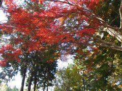 平泉で紅葉狩りと御朱印巡りの一日