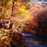 日差しを浴びて輝く紅葉 ~西明寺の秋はじまる~