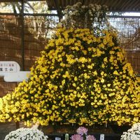 川越菊祭り