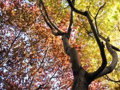 秋晴れの午後に車でさくっと智光山公園の植物園と動物園へ(前)ほんのり紅葉の中、公園まつりでにぎわう都市緑化植物園