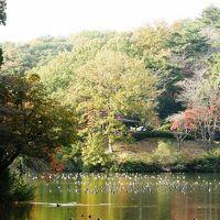 比企郡吉見町の比企丘陵を紅葉と遺跡を求めて歩く・・・①八丁湖一周ウォーキングコースを歩く