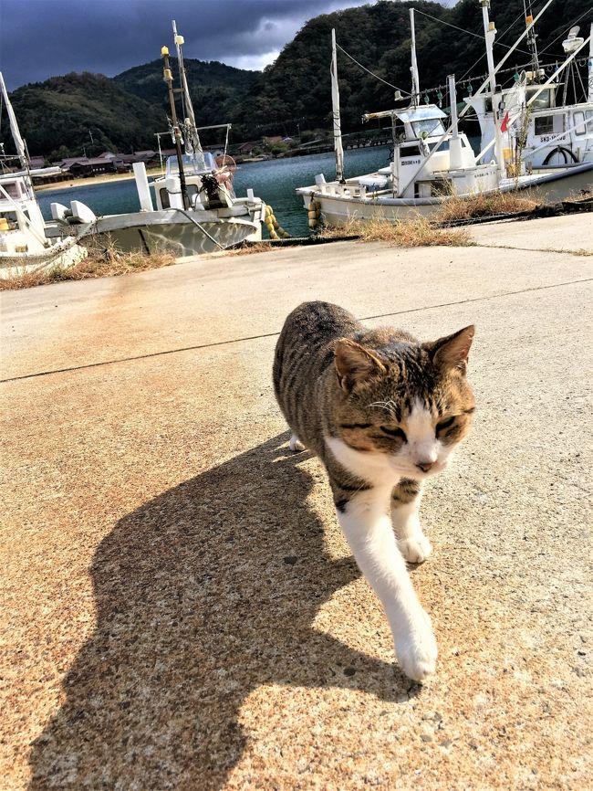 投稿日:2017年12月13日<br /><br />妊娠7か月の頃の旅行記です。<br />2日目は昼過ぎまで温泉津温泉をぶらぶらして松江に向かいました。<br />温泉津の温泉と猫に癒され、松江では宍道湖に沈む夕日を眺めて、夜は隠岐料理が食べられる居酒屋さんに行きました。