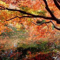 紅葉まっさかり、泉自然公園を歩く