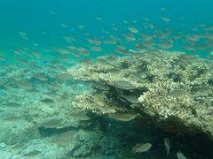 イカの群れと一緒に泳ぐことができた鹿島