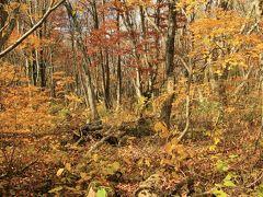 紅葉とクラゲに会いに秋の東北へ (1)黄金色の世界 中島台レクリエーションの森