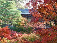京都 ひたすら寺院を巡り紅葉をめでる一人旅(その1)