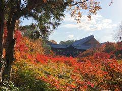 秋満喫☆紅葉まっさかりの東福寺・雲龍院