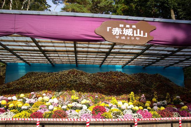 「弥彦菊祭り」は全国隋一の規模を誇る菊花大展覧会です。今年は11月1日~11月24日までの開催。今年の週末はずっと天気が悪く、なかなか行く気力がわかず・・・。13日の月曜は晴れるということで、行ってきました。<br />菊祭りの頃は弥彦公園の紅葉も重なり、観光バスも多く、車も駐車場に入るために渋滞しますので、今回は電車で行ってみることにしました。<br />新潟ー吉田間は1時間に1本ほどあるのですが、吉田-弥彦間の電車が少なく、思いの他、電車も混んでいました。<br />弥彦の観光エリアは狭いので、駅から弥彦神社までは徒歩10分程です。限られた時間で楽しい散策ができました。<br /><br />行き<br />新潟駅(9:22)→ 吉田駅(10:19)乗換(10:24)→ 弥彦駅(10:32)<br /><br />帰り<br />弥彦駅(15:15)→ 吉田駅(15:24)乗換(15:39)→ 新潟駅(16:33)<br />