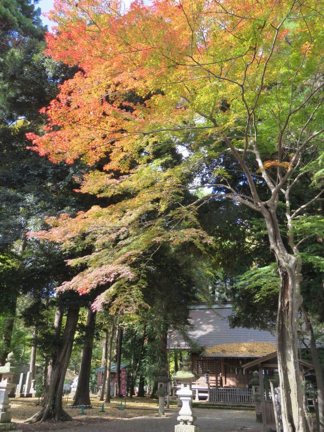 11月16日、午後0時半頃に多聞院での紅葉風景を楽しんだ後、その隣にある神明社を訪問した。 この神明社は毎年、正月にはこの付近の人々が沢山三社詣りで訪問する場所であるが、この時期は多聞院の方に沢山の人が訪れて神明社の境内は森閑としている。 今回は数少ない紅葉を愛でながら、神明社の奥にある鎮守の森「花の小径」を歩いて見た。<br /><br /><br /><br />*写真は紅葉で美しい神明社の境内