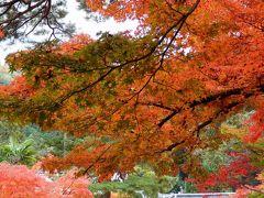 京都奈良一人旅☆2017年11月~初めての奈良とご縁でつながる祇園一人飲みデビュー