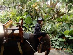 動物園 Ⅰ :象乗り  インドネシア・バリ島