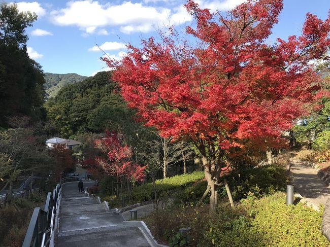 福岡出張が日曜をはさんだため、太宰府の九州国立博物間の「桃山展」を見に行くことにした。<br />でも、せっかく11月の太宰府に行くなら紅葉も楽しまないともったいない。<br />ということを、行きの電車の中で気づき、急遽、スマホで検索し、行程を決める。<br /><br />太宰府駅~竈門神社~太宰府天満宮~光明禅寺~九州国立博物~太宰府駅