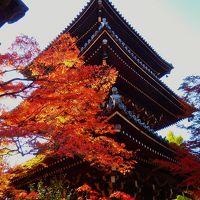 塔に紅葉~秋映える真如堂~