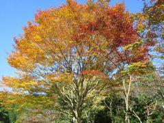 琵琶湖周遊の旅