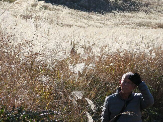 (写真は箱根仙石原)<br /><br />14-15日は熱海、20-22日は箱根と例年温泉療養にきています。<br /><br />・箱根路も富士をバックに冬支度<br /><br />・雨の日は紅葉も散るよ今日休み<br /><br />・相撲道死ぬか生きるか別れ道<br /><br />※相撲界がなにやら囂しい。ここらで相撲の本来の意義、在り方をゼロから問い直さないといけない。<br /><br />◎写真集Ⅶ、「いい町ひとり旅」<br /> 写真集Ⅷ、「夢の中へ」<br />  完成しました。