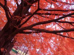 紅葉の美しい杜の都へ~仙台・聖地巡礼とグルメの旅
