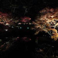 2017年 大田黒公園紅葉ライトアップ